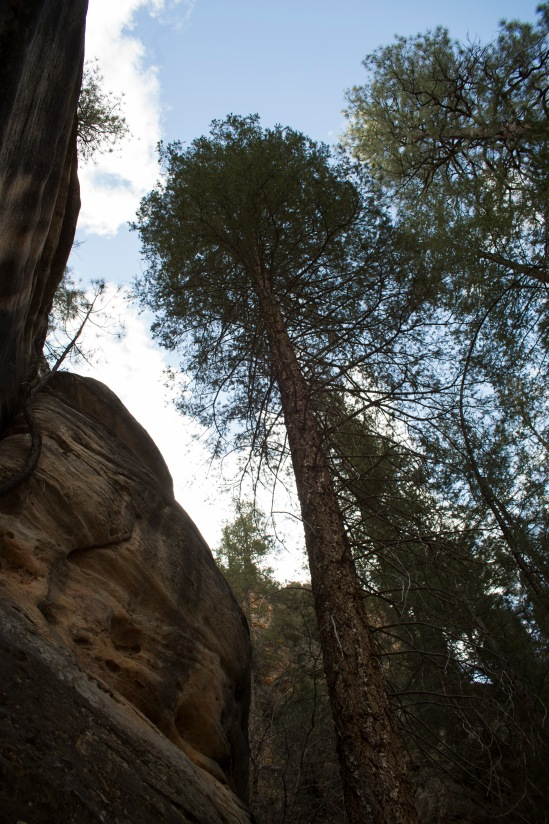 Our first stop as we left Sedona. I was fascinated by the tall narrow tree with the small tree growing out of the rock.