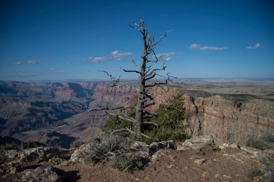 Dead tree on the rim of the Grand Canyon at Desert View.