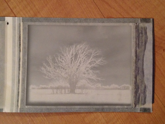 The negative of the tree is a very interesting image on its own.