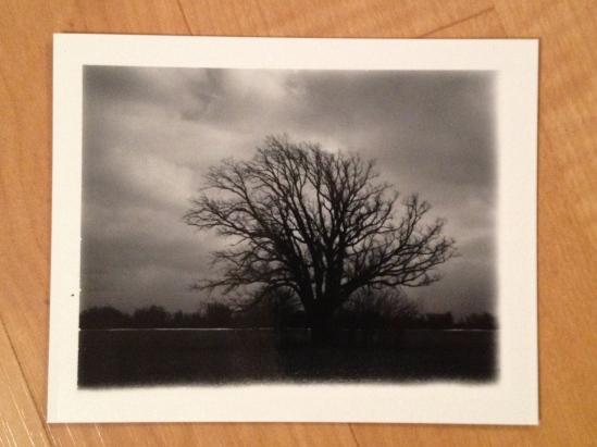 big tree on 42