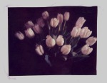 Bunch of tulips - An original Polaroid emulsion lift.