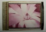 Magnolia closeup - Polaroid Type 64 print.