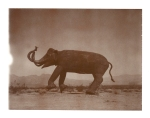Mammoth - Anza-Borrego Desert / Expired Polaroid Silk 664.