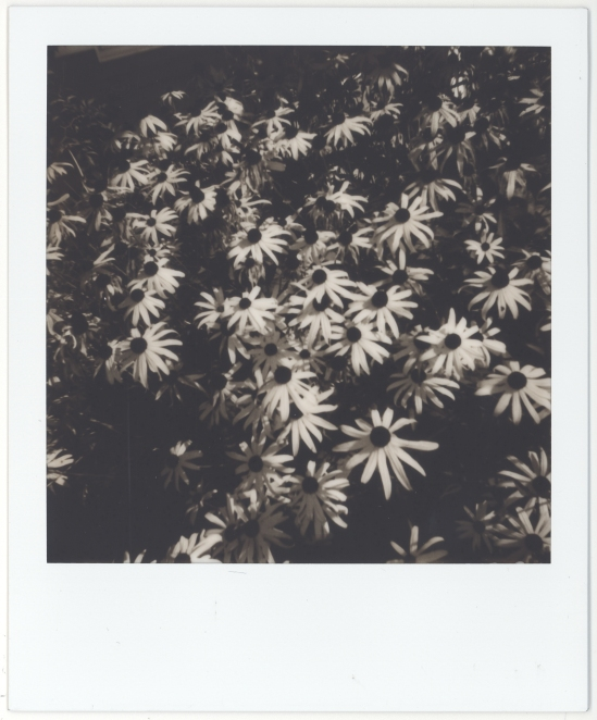 7) A bunch of orange flowers look interesting in BW.