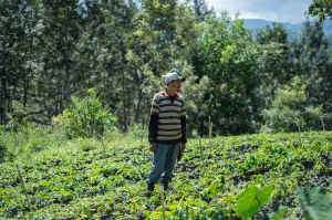Through English translation, David explained how he would grow a variety of coffee plants in the nursery and then would later replant them on the mountainside.